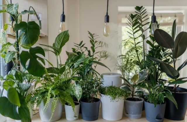 Group of house plants in white and grey pots