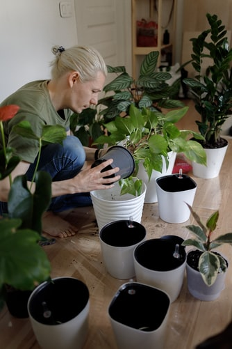Man with light hair repotting plants