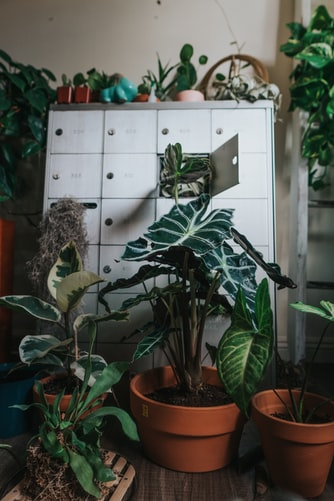 plants in house