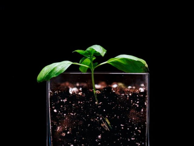 Plant growing in soil and coffee