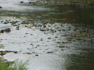 A gently flowing river, strewn with rocks
