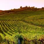 De 5 mooiste regio's van Toscane
