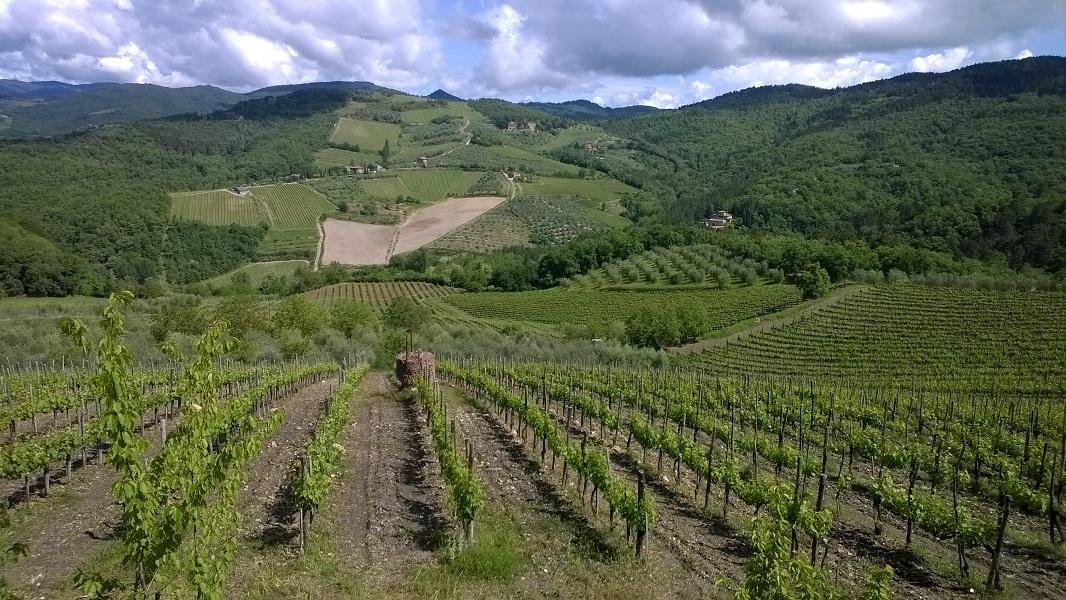 Zicht op de prachtige Chianti streek vanuit de afdaling van de Monteluco