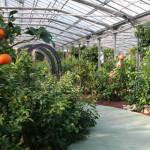 200 soorten citrusvruchten in de tuinen van Oscar Tintori