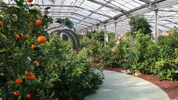 giardino degli agrumi 02