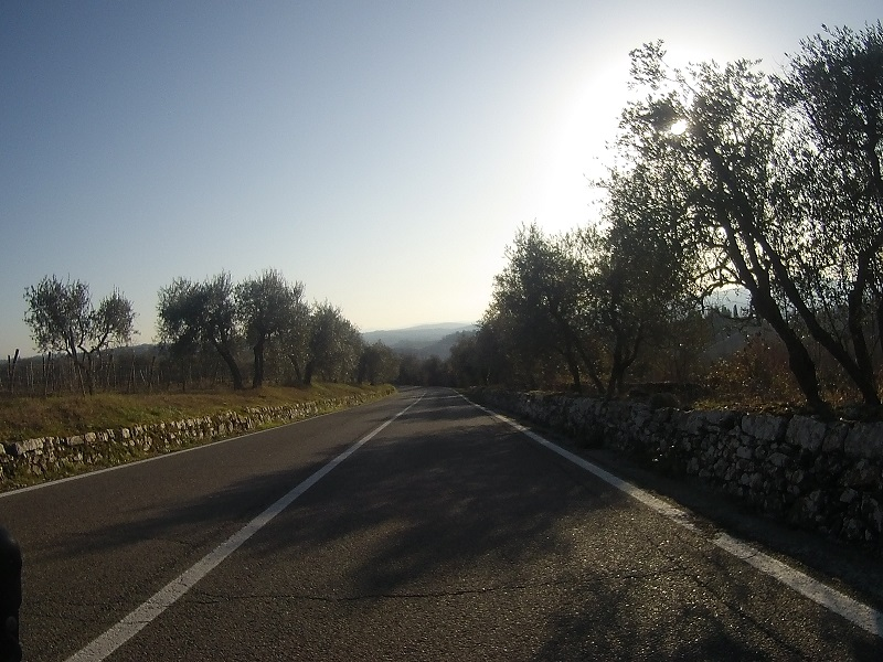 olijfbomen Toscane
