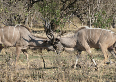 Safari Travel Experience Header Kudu