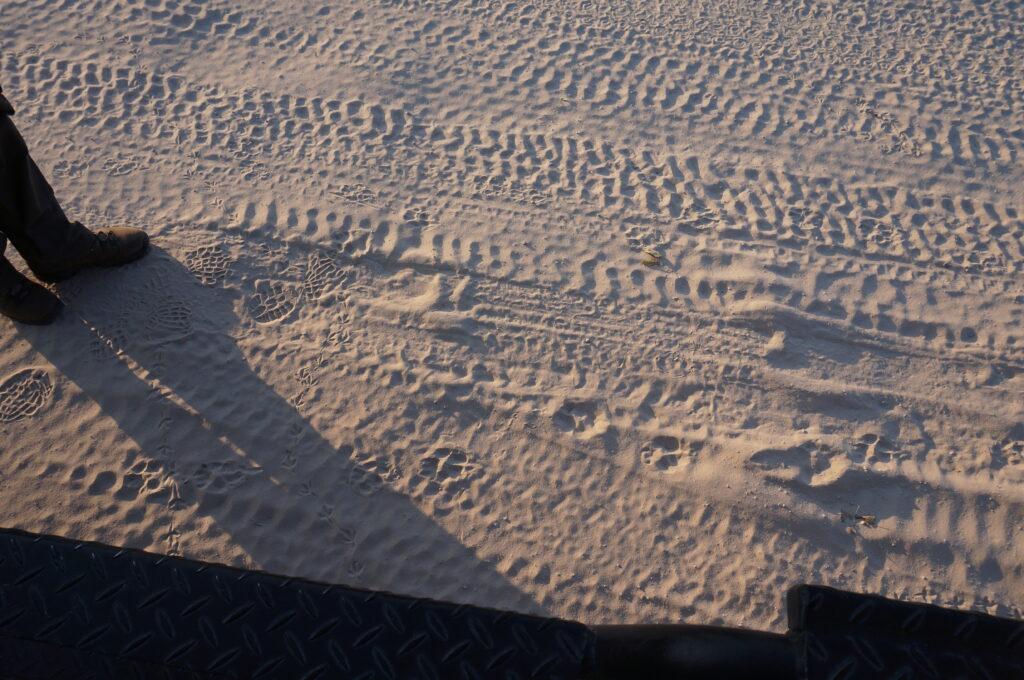 Safari in Botswana tracks