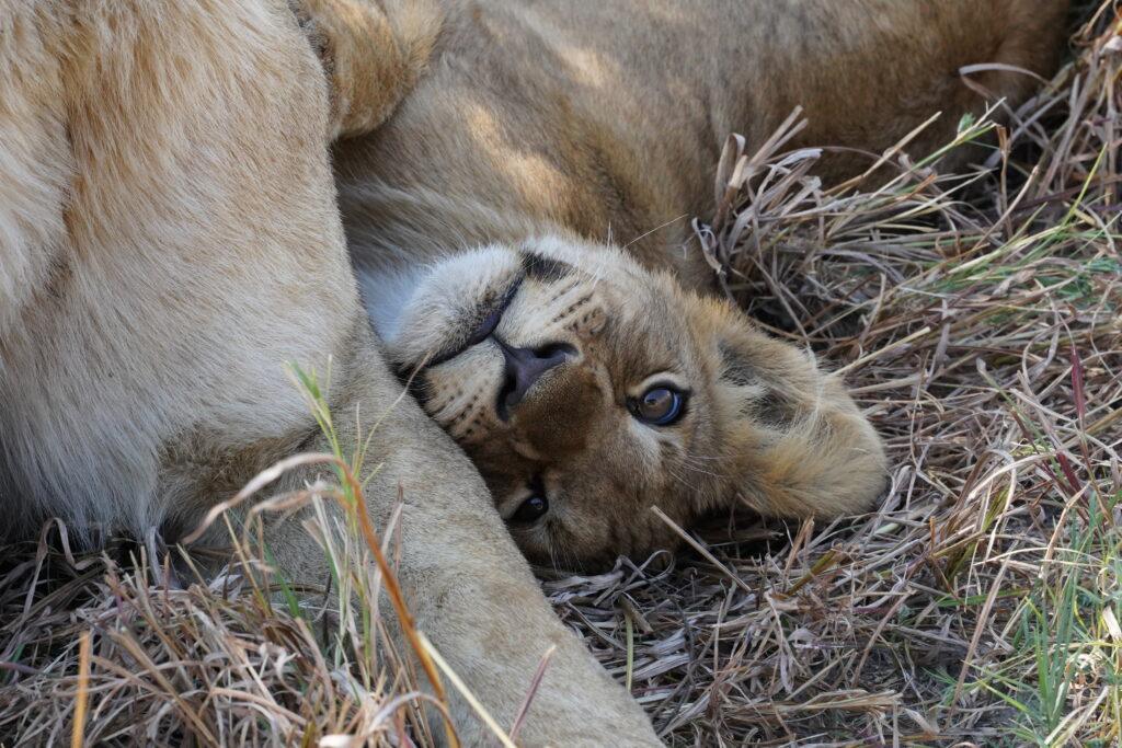 Brave Africa Blog Header