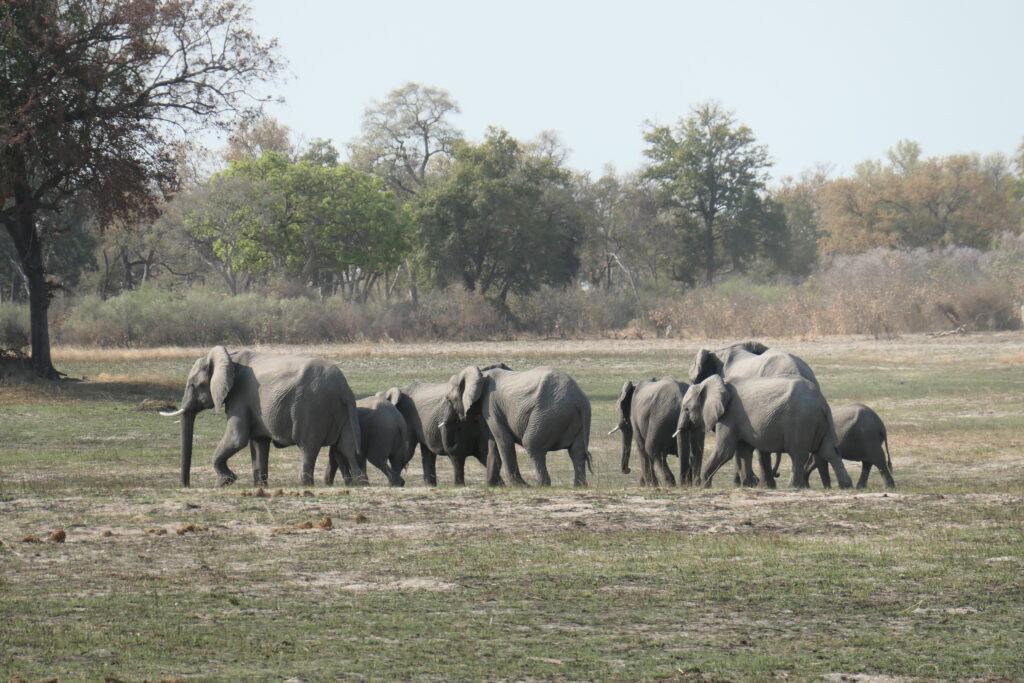 Elephant Hunting Ban
