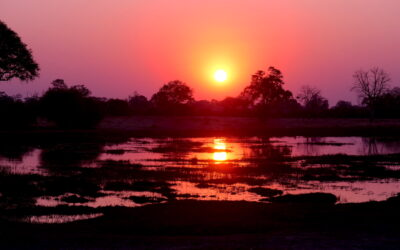 The Brave Africa Difference: All-Day Safari Experience
