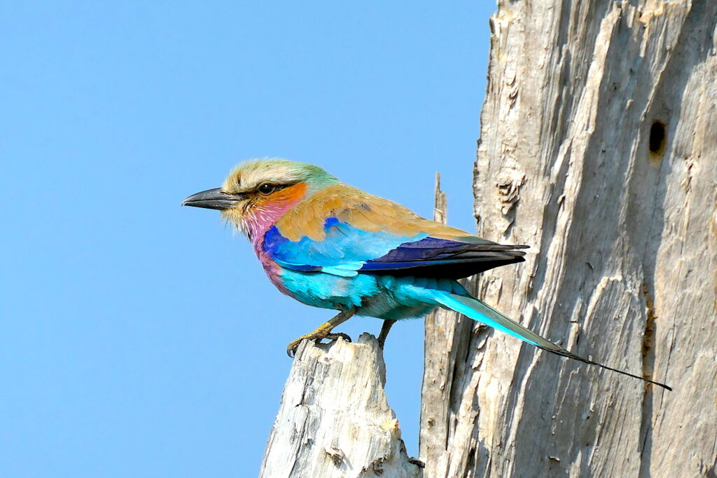 birding Botswana