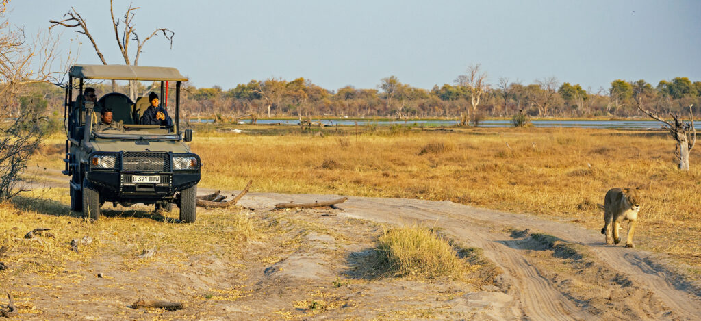 Safari guiding close encounter