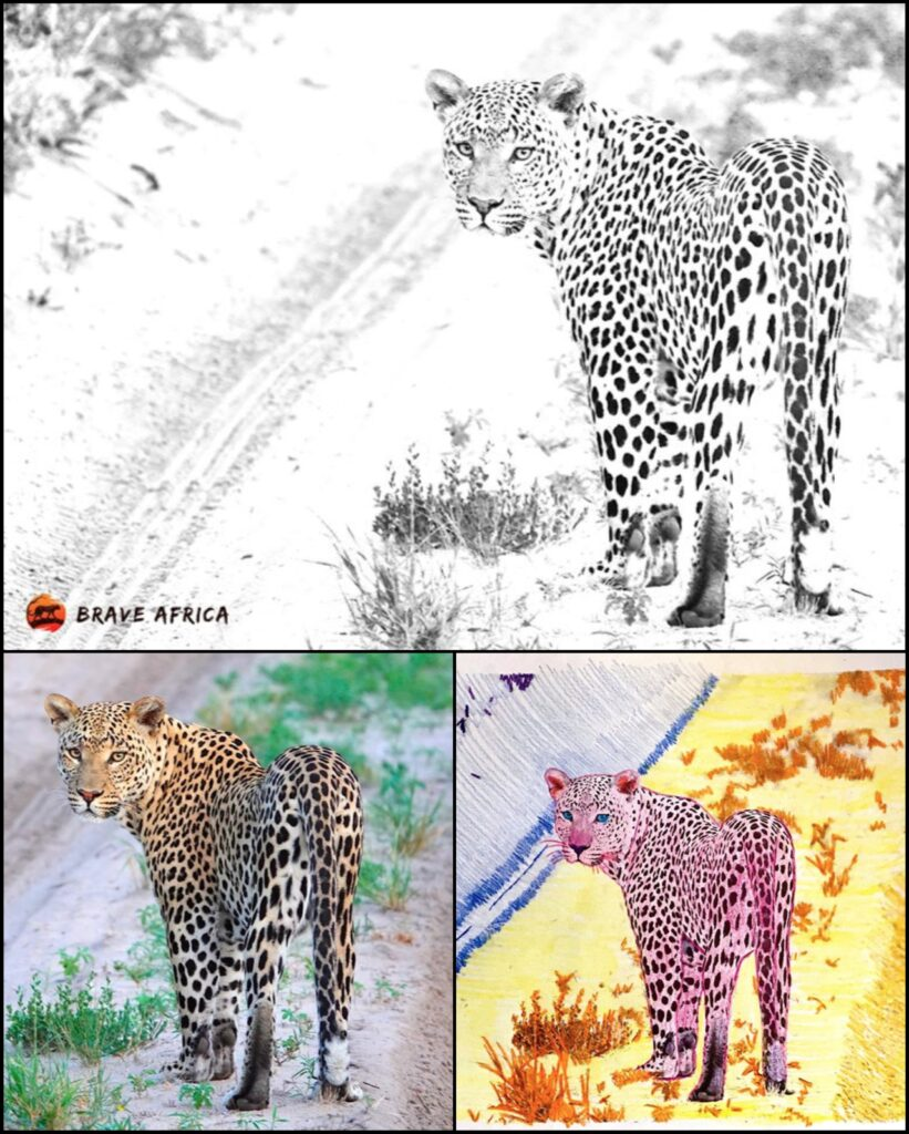 Brave Africa coloring page leopard 1