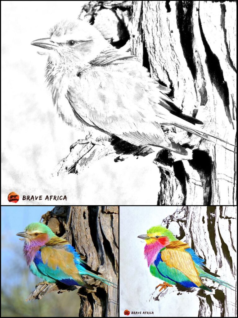 Brave Africa coloring page Bird 1