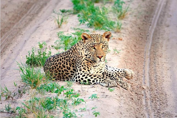 safari vacation in Botswana COVID-19