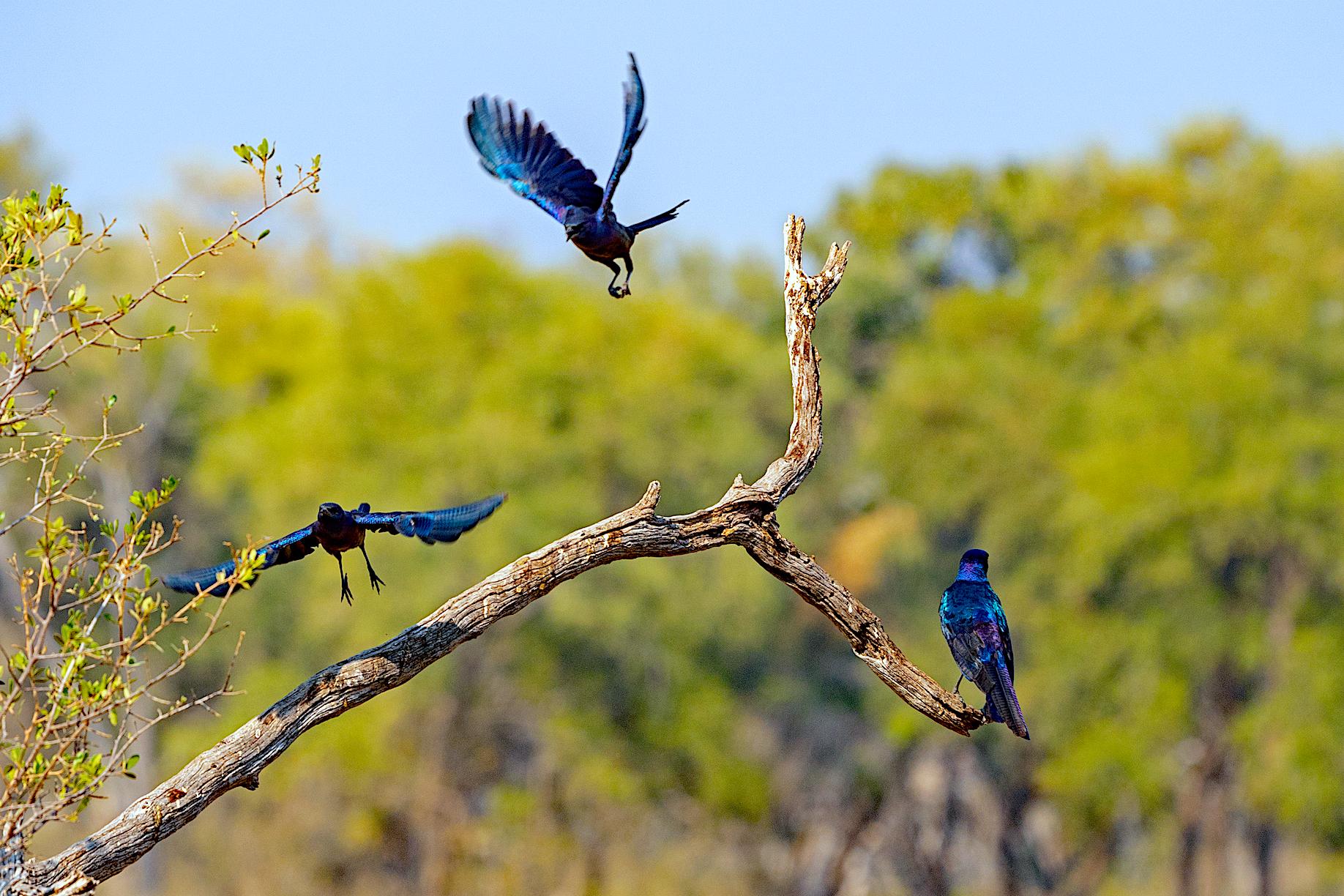 Visit Khwai Concession for excellent birding