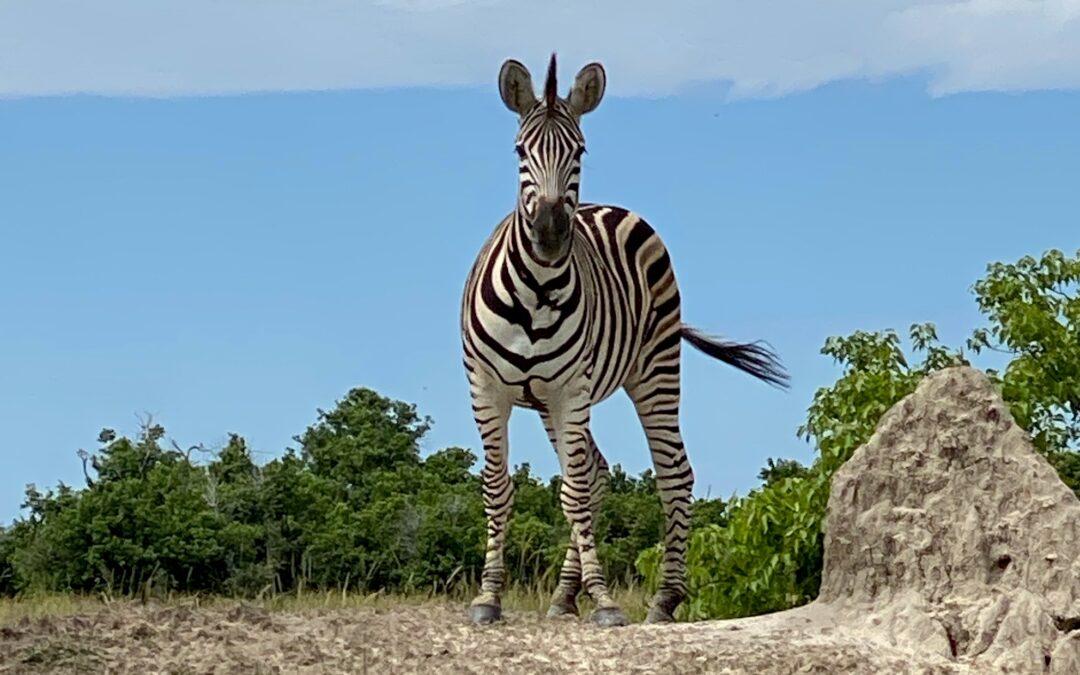 12 Reasons to Visit Khwai Concession on Safari in Botswana