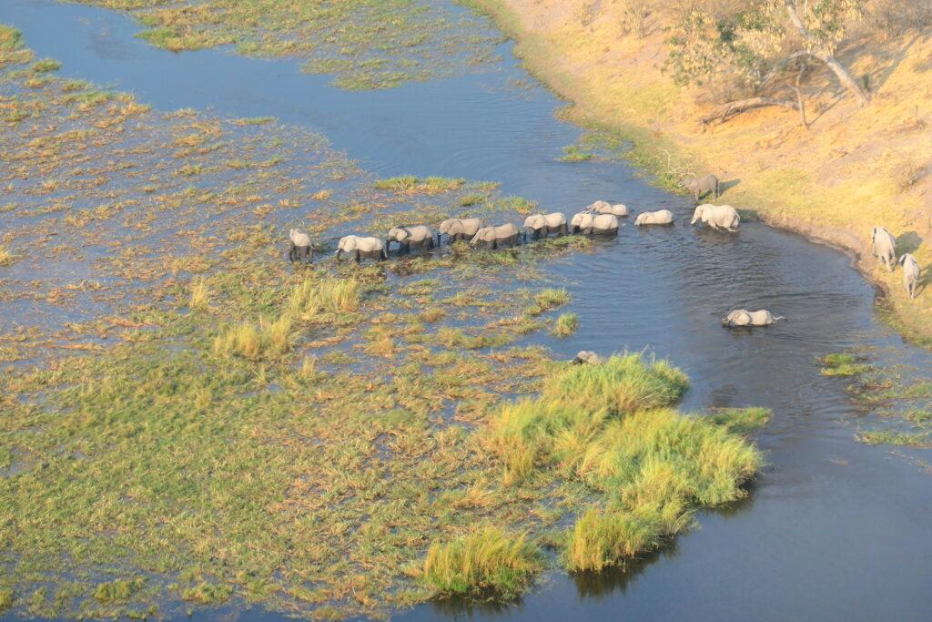 Unique Africa Safari Activities