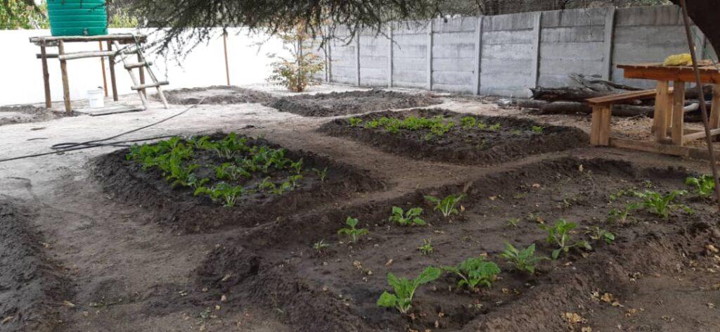 Brave Africa Garden