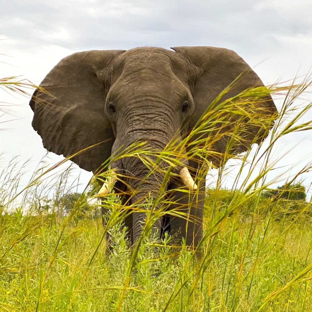 Botswana Safari Travel Elephant
