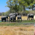 Botswana Safari Travel 2021