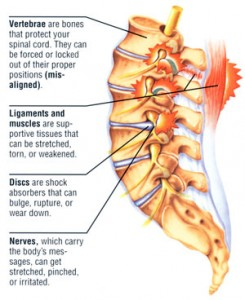 lowbackpain-spine