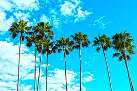 Florida Blue - barlow family insurance