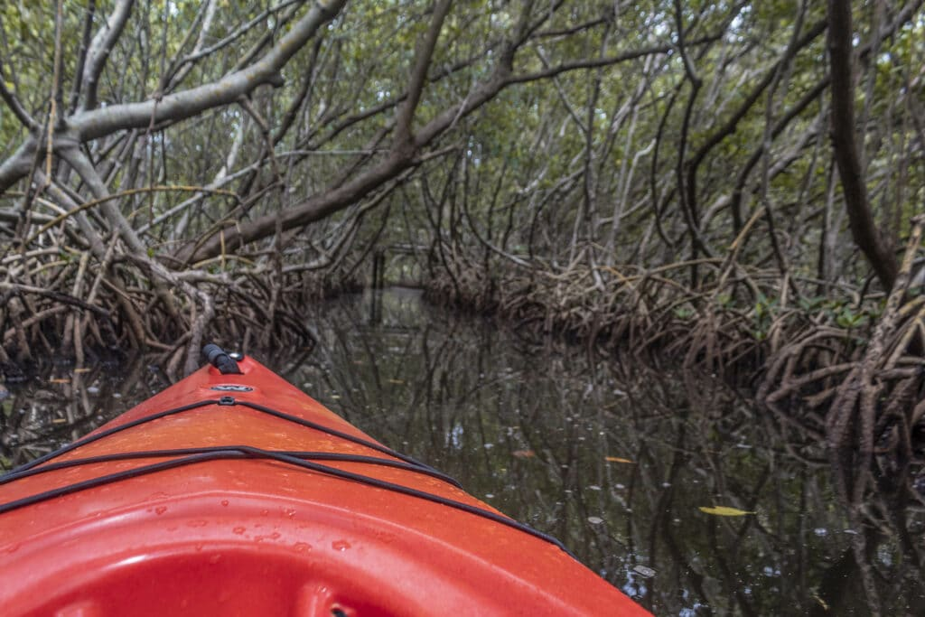 Weedon Island Kayaking