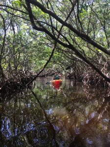 Kayaking through Weedon Island Preserve Mangrove Tunnels