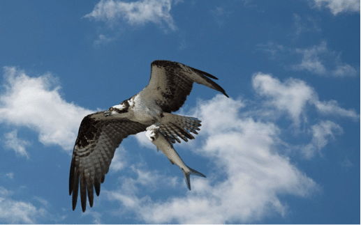 Florida Sea Birds