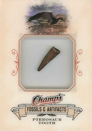 A 2008/09 NHL Champ's Fossil card of a Pterosaur Tooth