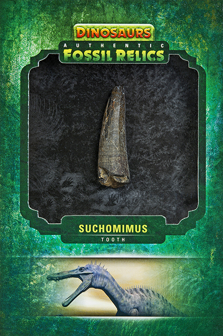 2015-Upper-Deck-Dinosaurs-Fossil-Relic-Cards-Suchomimus-Tooth