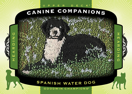 2017-Goodwin-Champions-Canine-Companions-CC75-Spanish-Water-Dog.